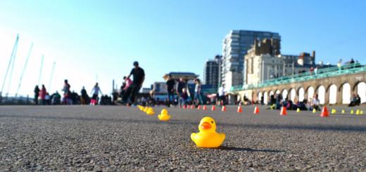 Brighton-ducks